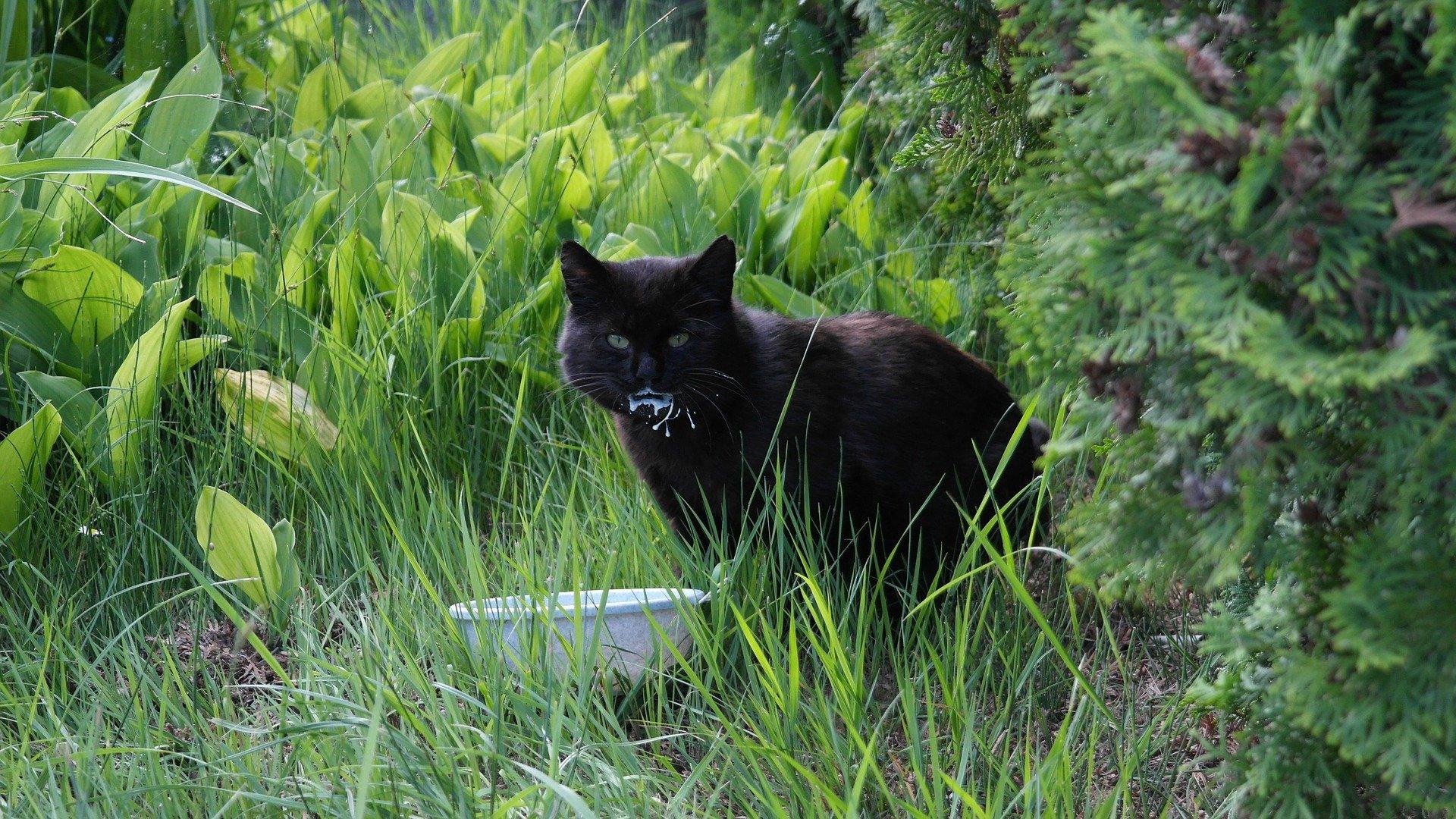 Cibi che fanno male ai gatti: ecco cosa evitare