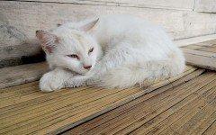 Rogna gatto: come si manifesta e come trattarla