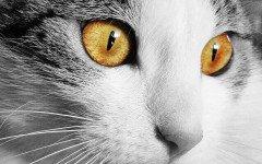 Come vedono i gatti? Le risposte alle curiosità