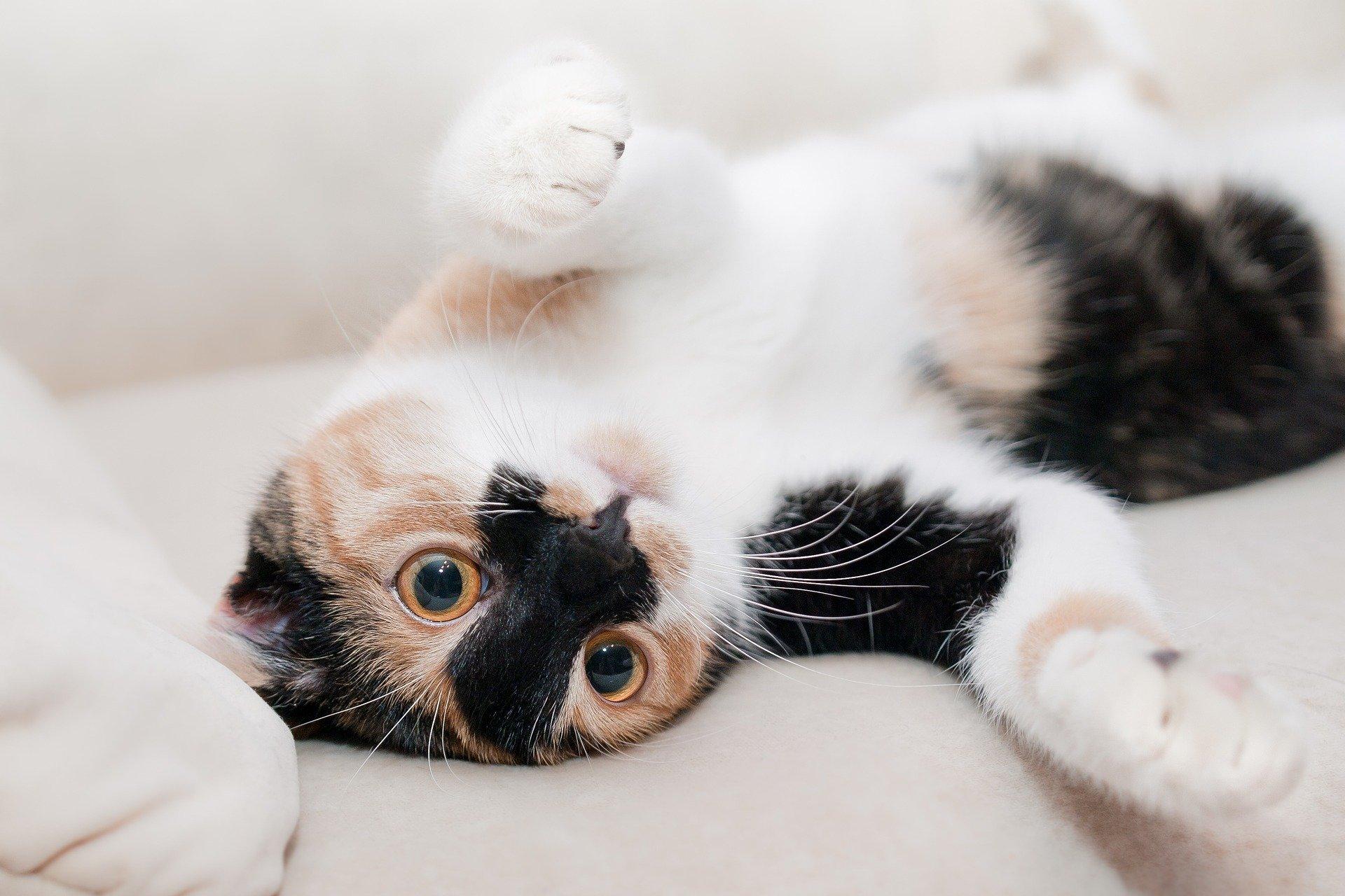 Nomi di gatti: quale scegliere per il proprio animale