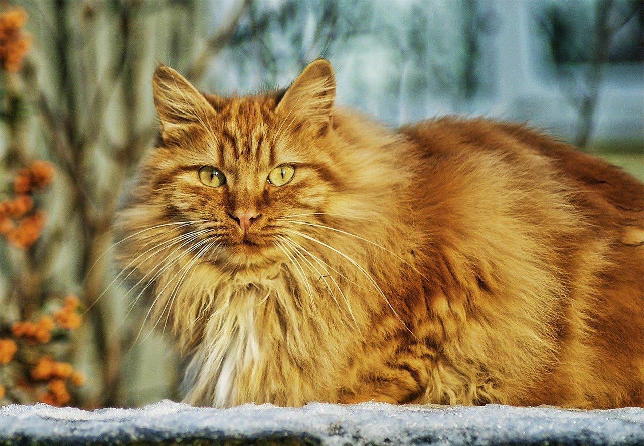 Peso del gatto: qual è il giusto peso per un gatto?