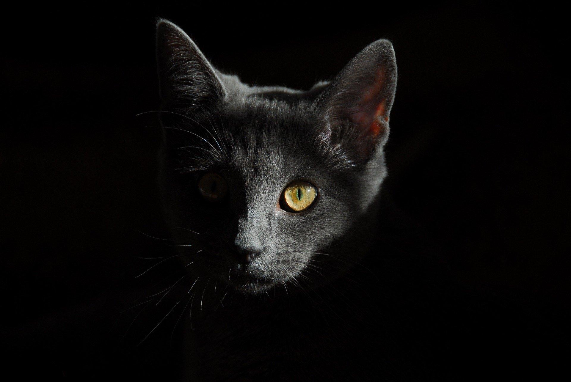 I gatti vedono i fantasmi e miagolano insistentemente
