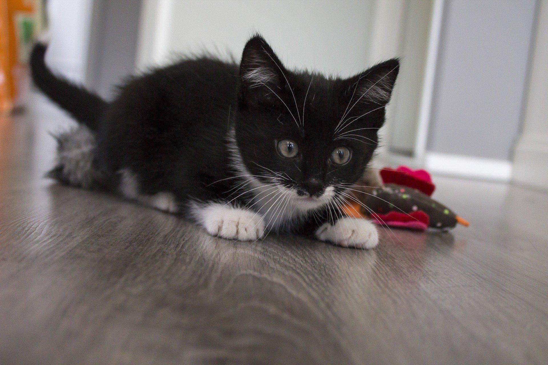 Giochi per gatti fai da te: come divertirsi in casa