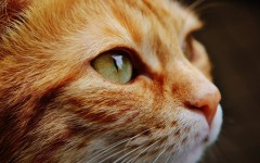 frasi sui gatti aforismi sui gatti frasi famose frasi gatti