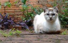 La micosi nel gatto: i sintomi e la cura dell'infezione