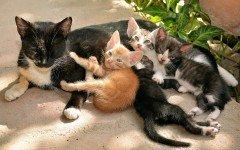 Le diverse fasi della gravidanza dei gatti
