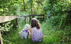 Helpful dogs for children's mental issues