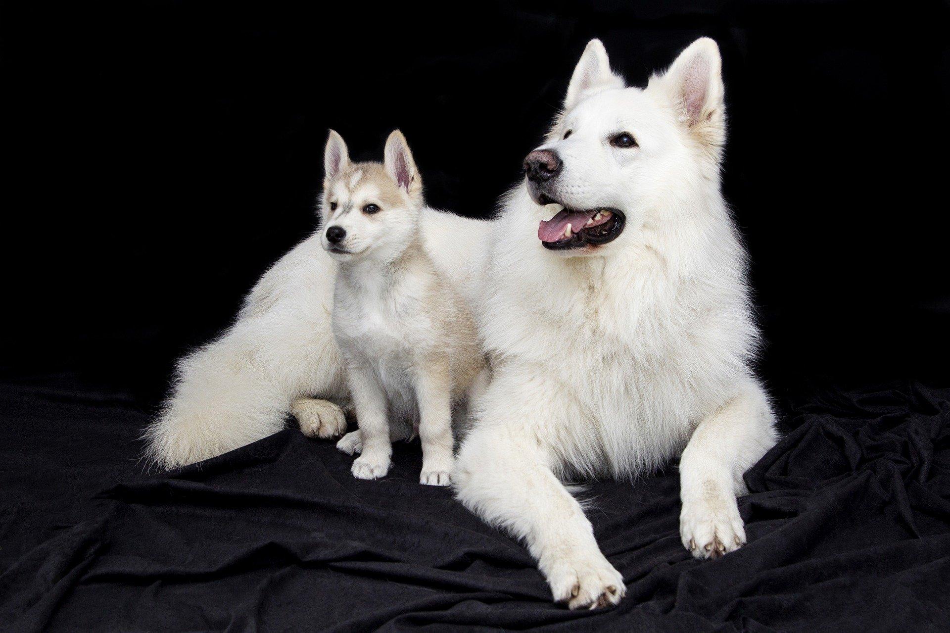 La gravidanza dei cani: ecco come trattarla