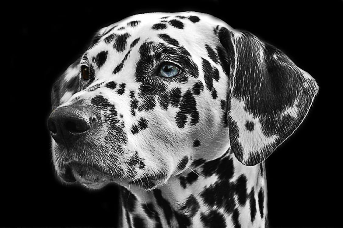 prurito nel cane malattie del cane Il prurito del cane