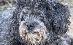 Vomito giallo cane: quando si manifesta e perché