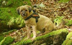 Pettorina cani, tutto ciò che occorre sapere