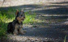 Cani piccola taglia: dolce compagnia a casa propria