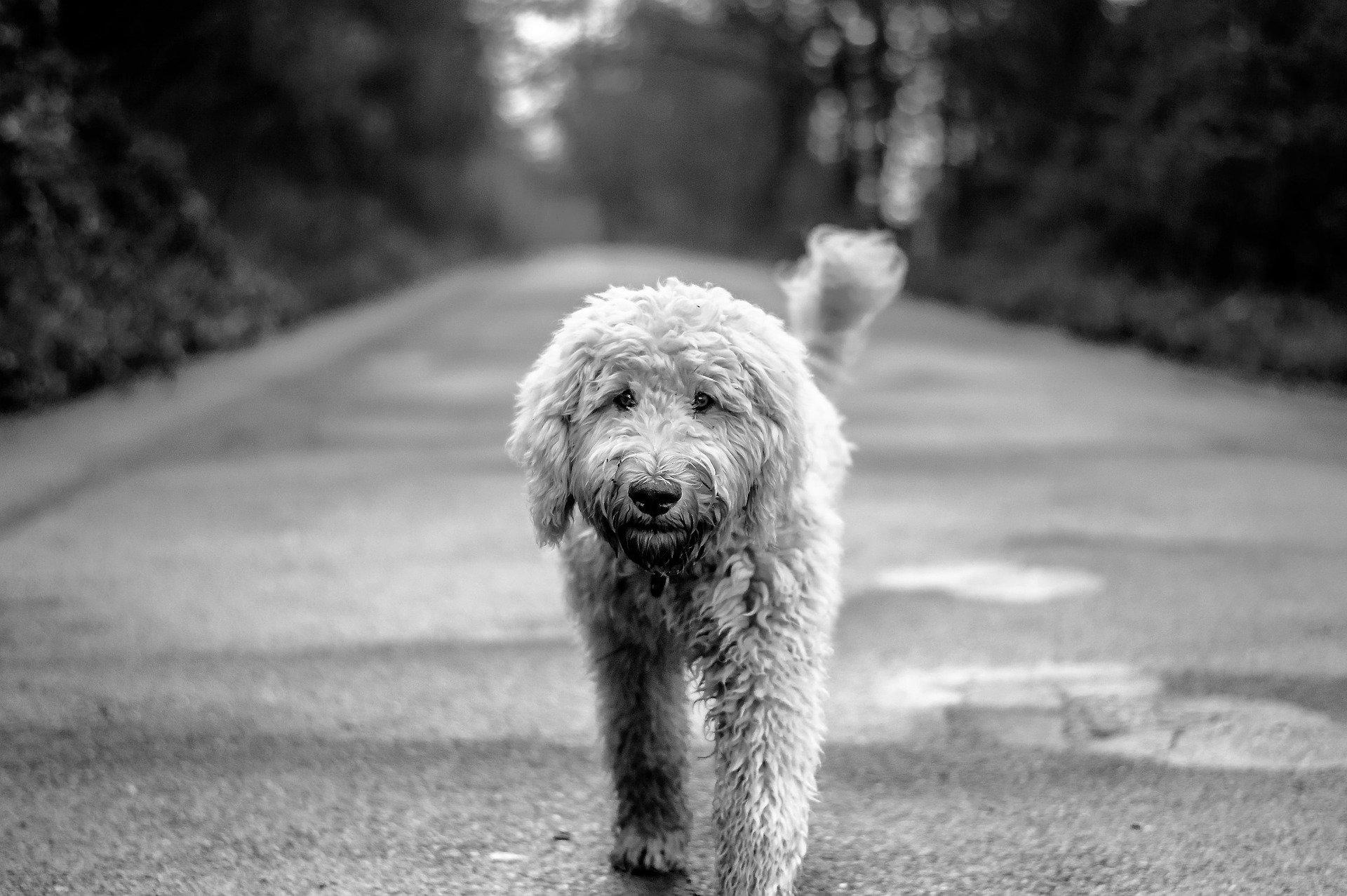 Processionaria cane, cos'è e come affrontarla