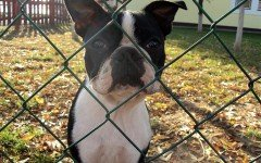 recinto per cani da esterno recinto per cani da interno