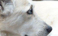 Le malattie neurologiche del cane: epilessia e ictus, i sintomi