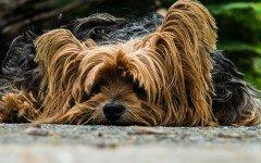 Le malattie trasmesse da zecche nei cani