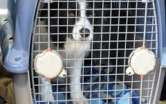 Trasportini per cane per ogni esigenza e viaggio