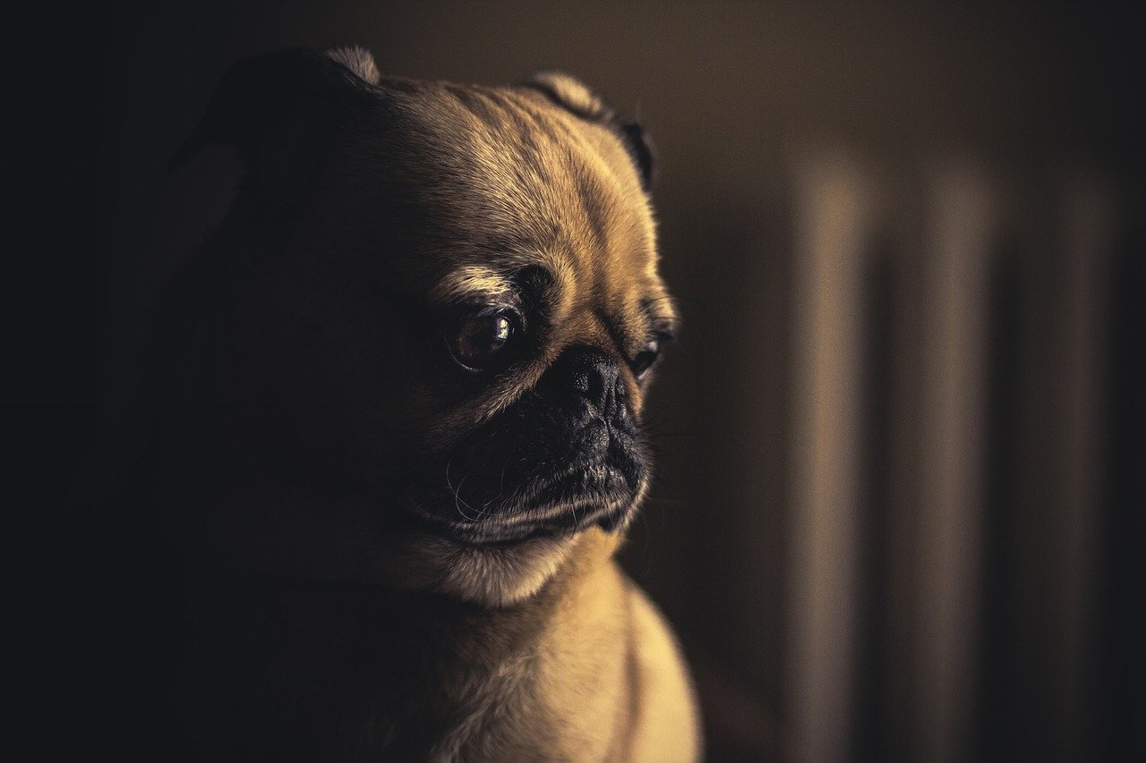 Mastocitoma nei cani: ecco i tipi e i sintomi