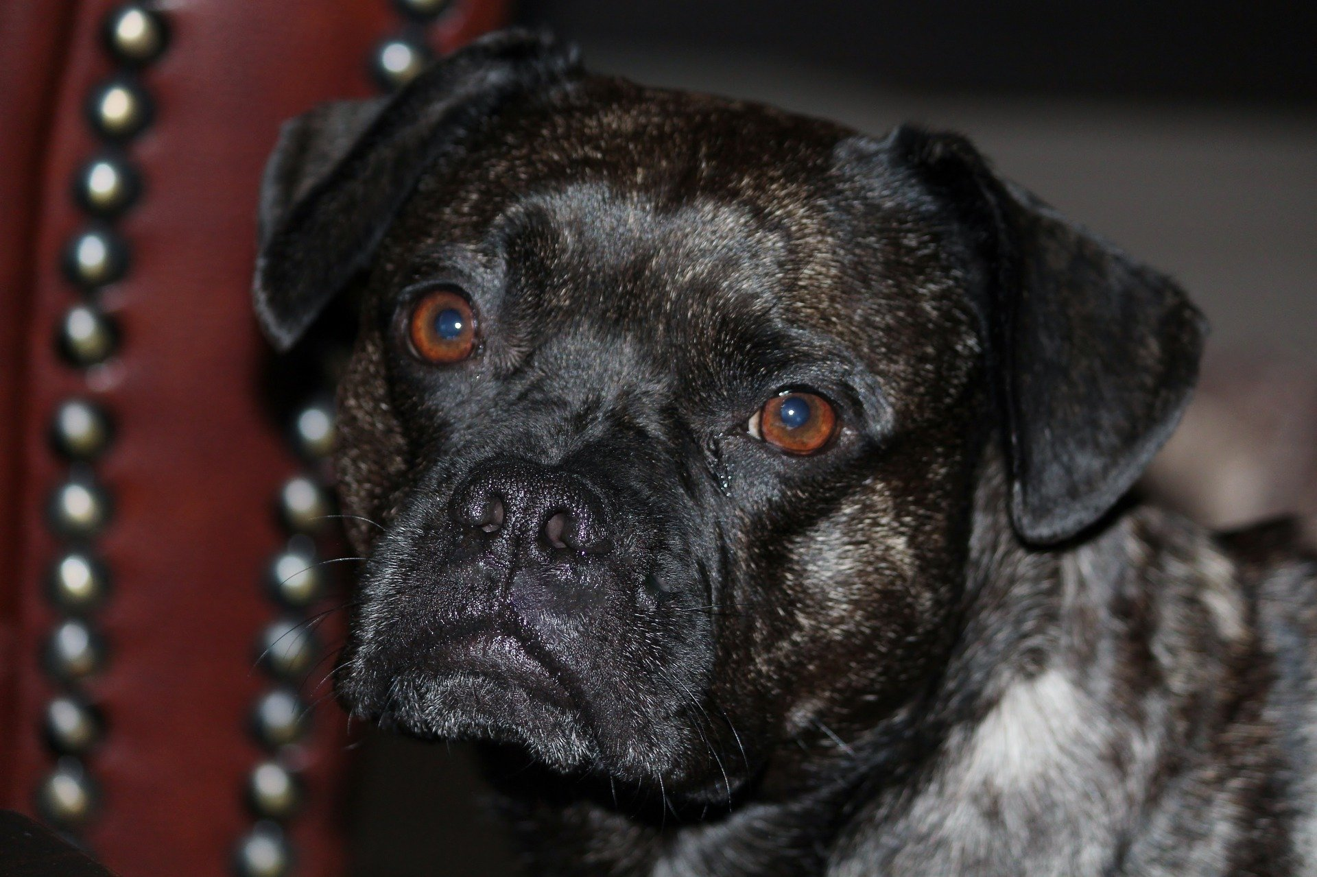Malattie del cane archivi dogalize for Antinfiammatorio cane