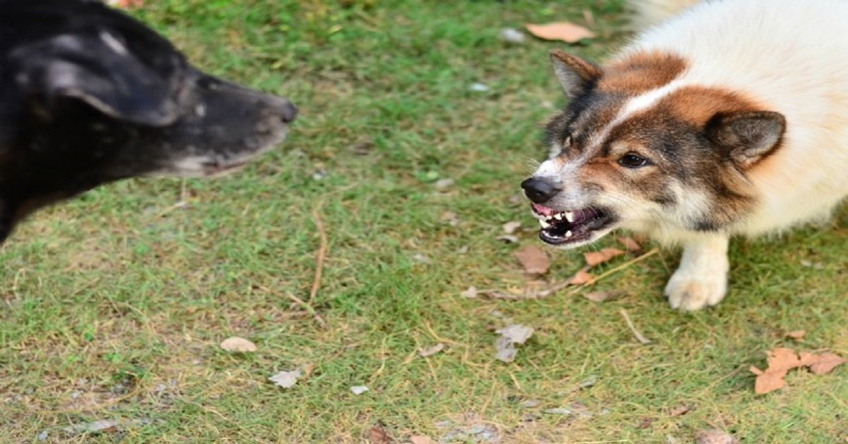 Tips to socialize an Aggressive Dog