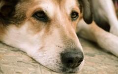giardiasi dei cani malattie cani