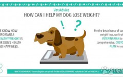 Preventing dog obesity and helping dog lose weight