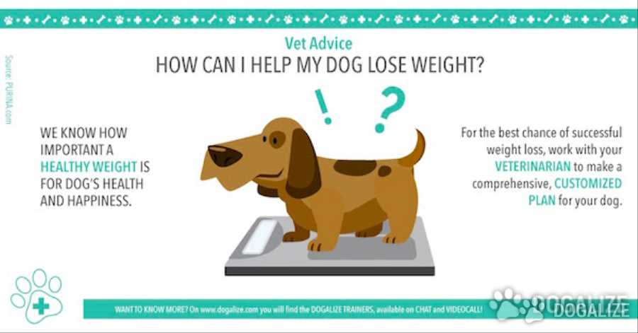 How do i get my dachshund to lose weight
