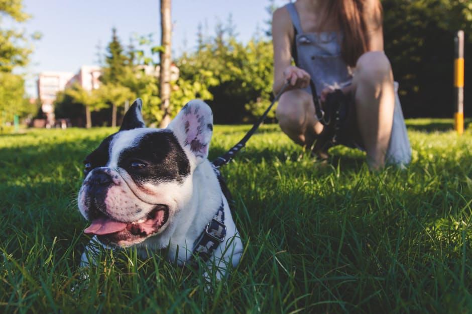 Nomi per cani femmina; qualche suggerimento per trovarli, con Dogalize!