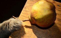 Dieta Barf dei gatti: cos'è e perchè sceglierla
