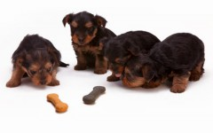 What's best Pet Food for Dogs?