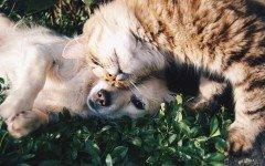 Socializzazione cane e gatto