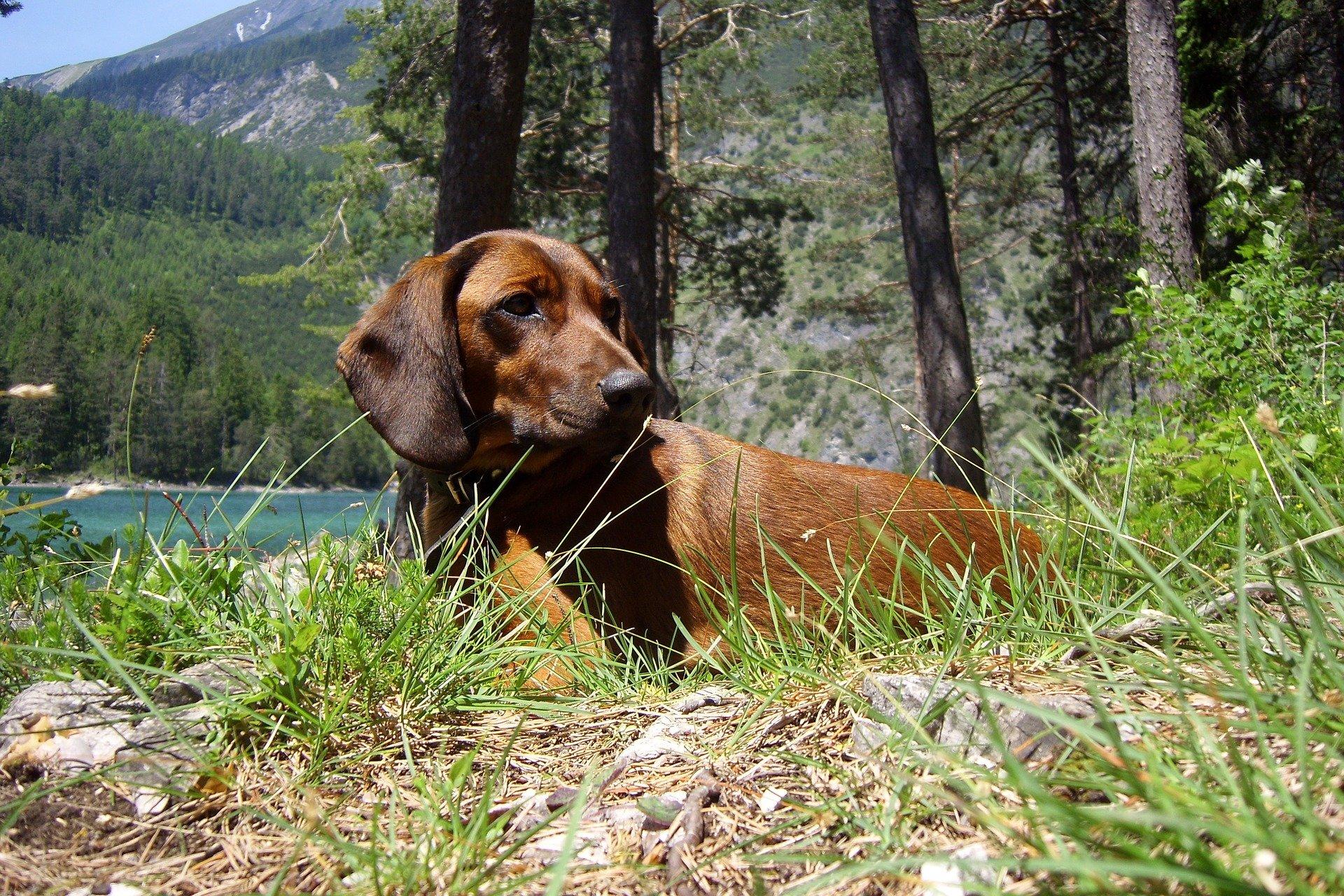 Cane da caccia: razze e caratteri di ogni genere