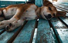 Iran, el refugio en un pais donde odian los perros