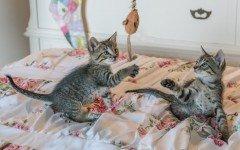 Accessori per gatti: oggetti indispensabili per accoglierli