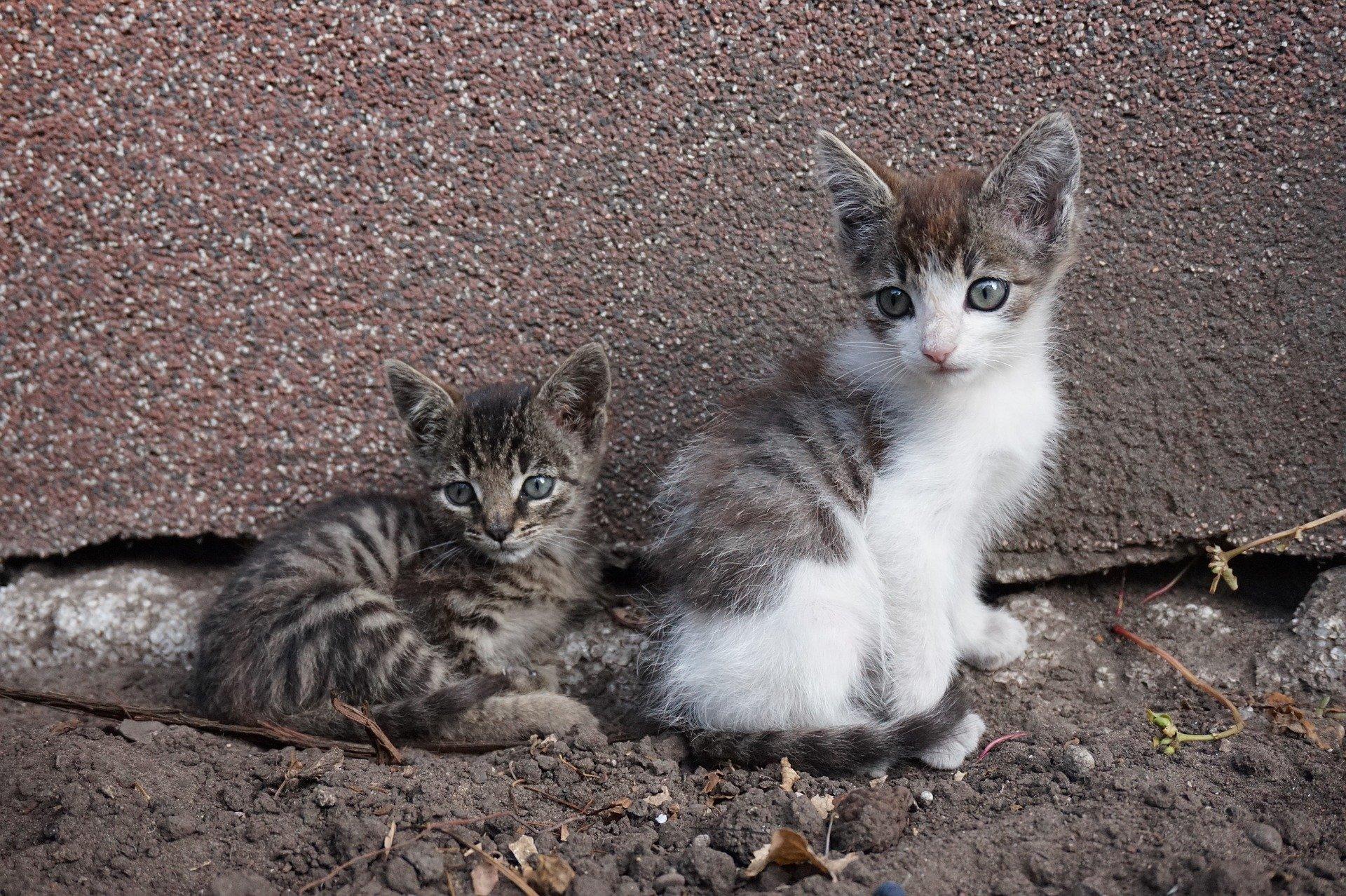 Lo svezzamento dei gattini: consigli utili