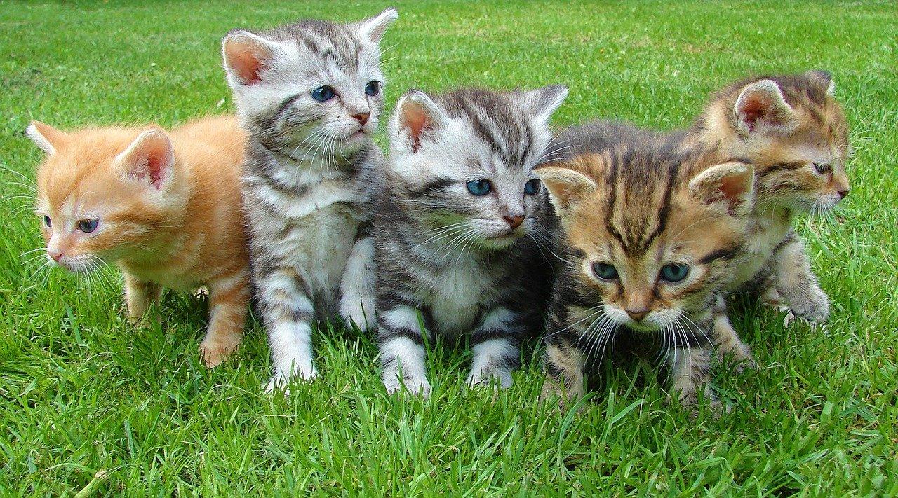 Gatti piccoli: attenzione all'alimentazione