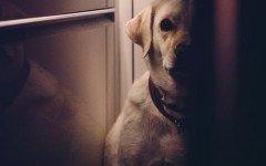 leishmaniosi dei cani malattie cane