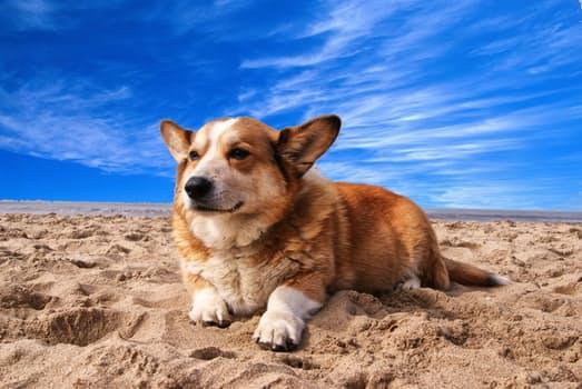 Dog studies: dogs have episodic memory