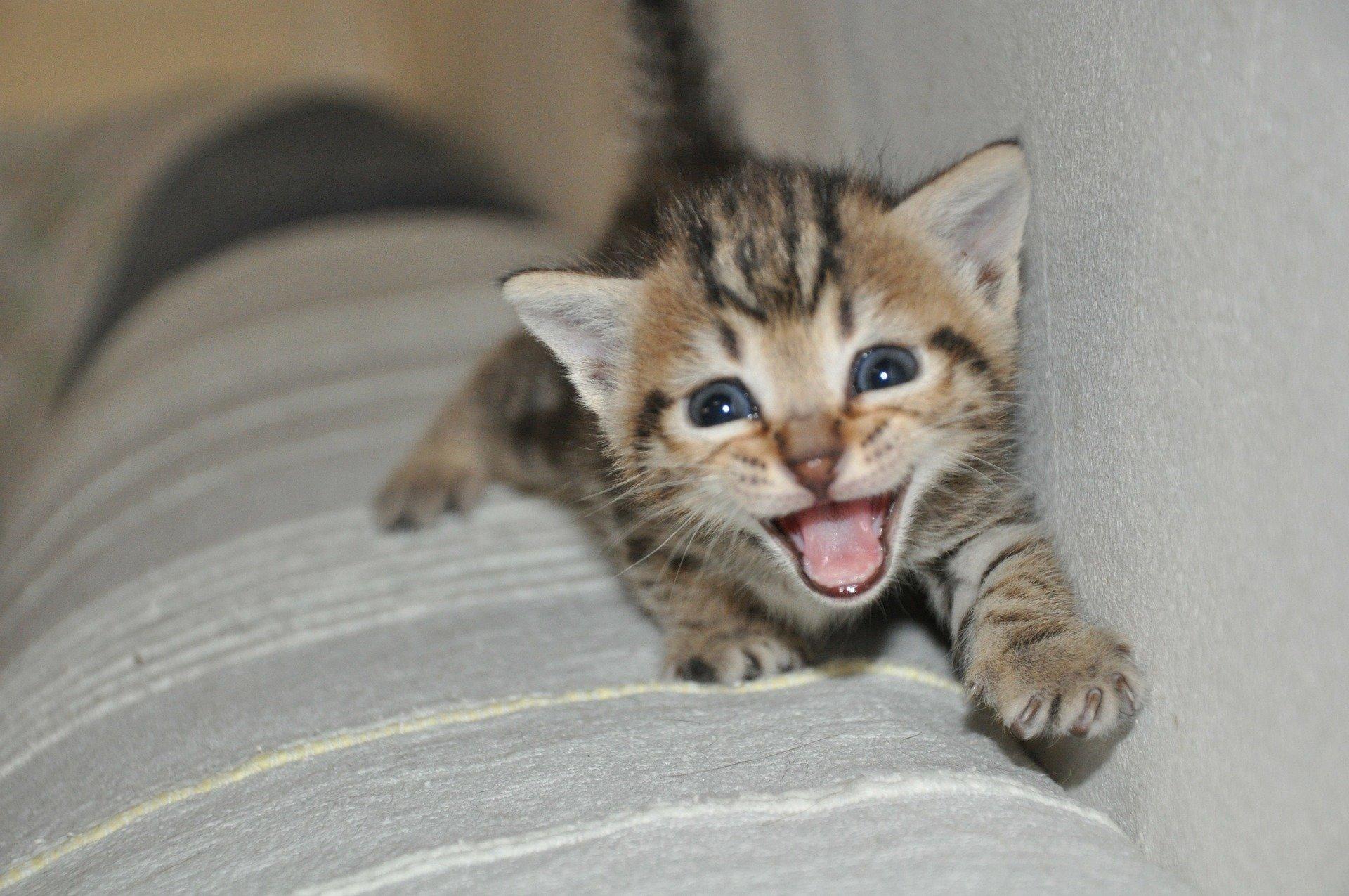 Miagolii, ecco come i gatti vogliono comunicare con te
