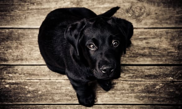 Cuidados de los ojos de los perros: recomendaciones