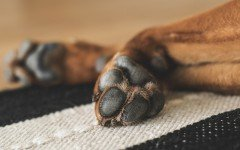 Cómo cuidar las patas de tu perro? pezuñas