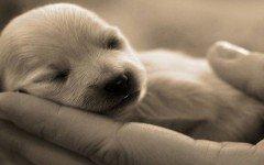 ¿Cómo cuidar cachorros recién nacidos? Recomendaciones perritos