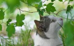 Malattie del gatto: la filaria