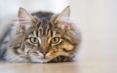 Merluzzo bollito per gatti: la bontà a portata di mano