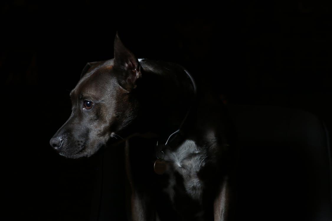 La gastroenterite nel cane malattie cani