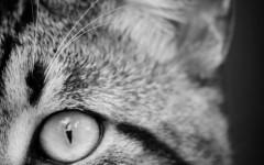 malattie diarrea del gatto diarrea ne gatto