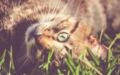 malattie del gatto prurito del gatto prurito nel gatto