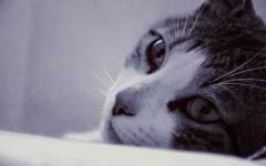 Malattie del gatto: l' Immunodeficienza felina (FIV)