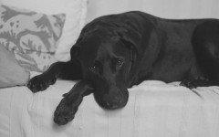 anestesia generale Anestesia del cane