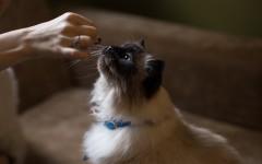 Cucina casalinga per gatti, benessere e salute assicurati